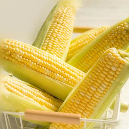 水果玉米净重8斤8-12根,现摘现发,生吃脆嫩无渣,炖汤更香甜  共同
