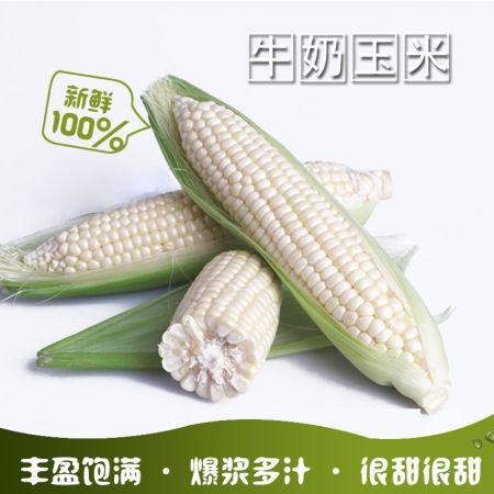 牛奶玉米精品4斤装,约6-8根