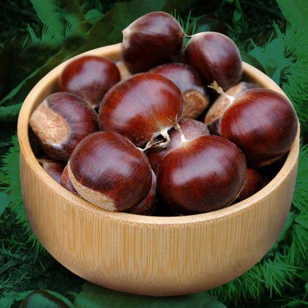 栗源 百年老树有机鲜板栗 5斤
