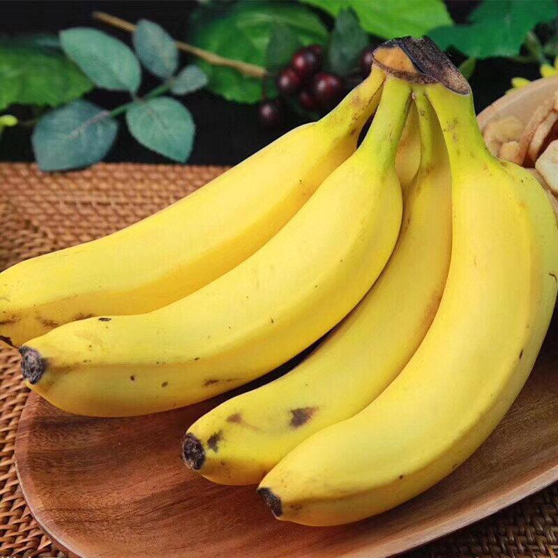 福建 天宝香蕉5斤(单果150g+顺丰包邮)