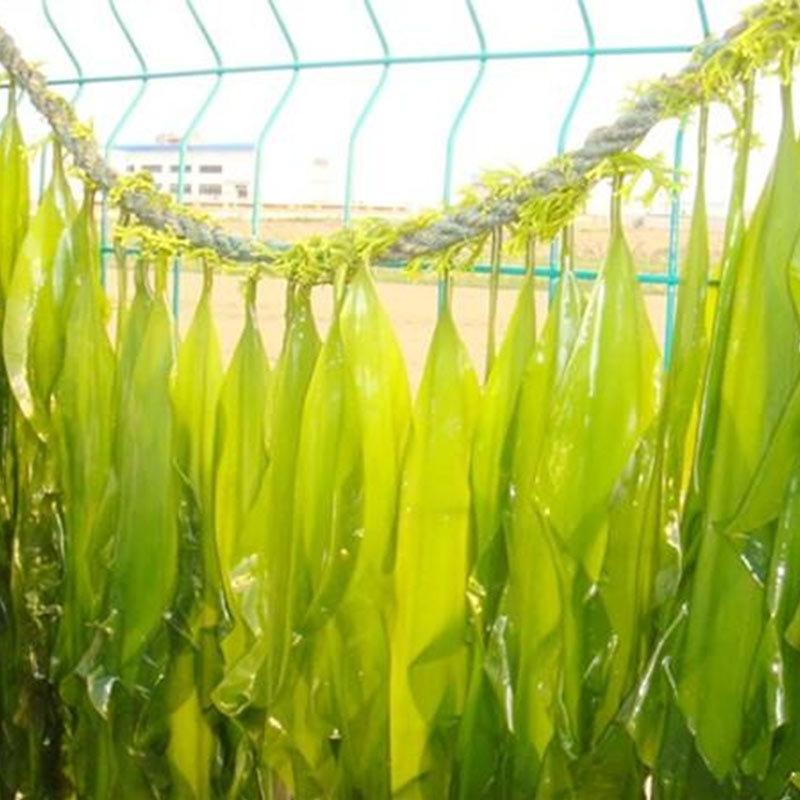 渤海圣岛即食海藻沙拉180g/袋*8·麻辣