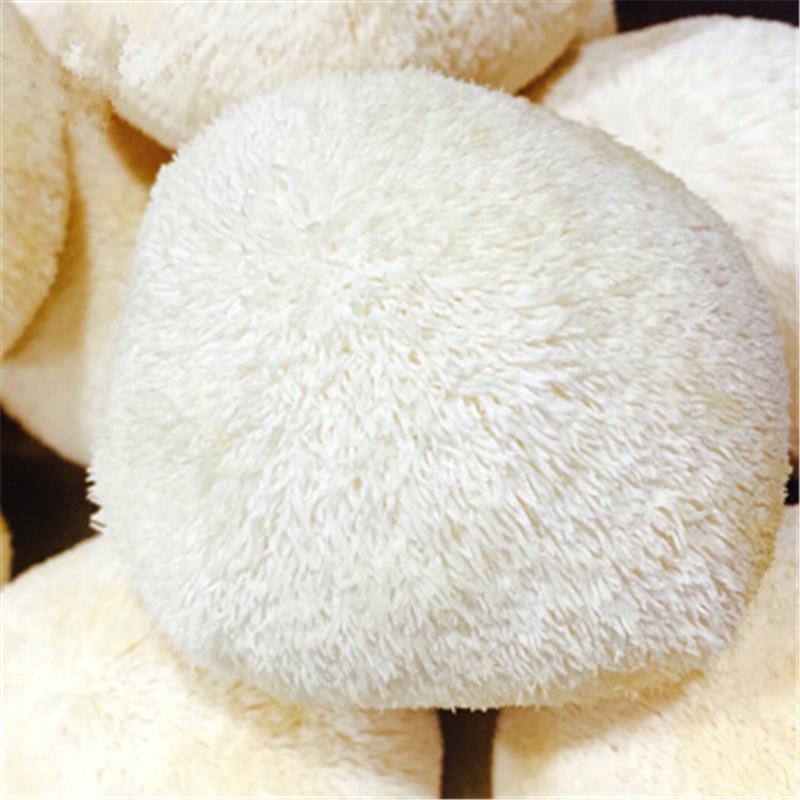 福建古田新鲜猴头菇(2斤,赠送1朵新鲜银耳)