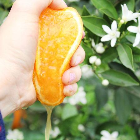 伦晚鲜橙净重9斤
