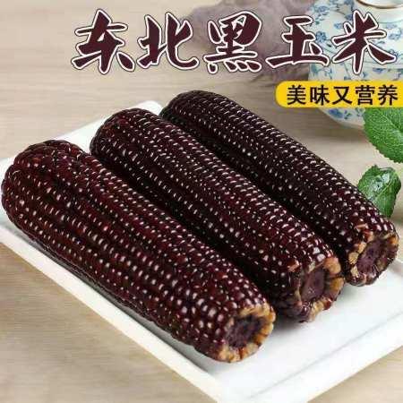 东北粗粮黑玉米220克/根*10根