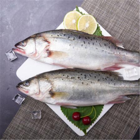 福建海捕海鲈鱼(3斤±10g,3条)帮杀后实际重量1275g,顺丰发货